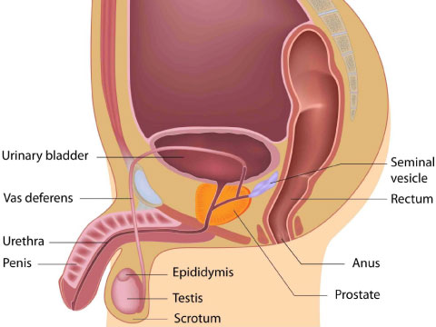 chronic-prostatitis