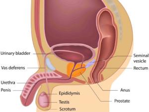 chronic-prostatitis